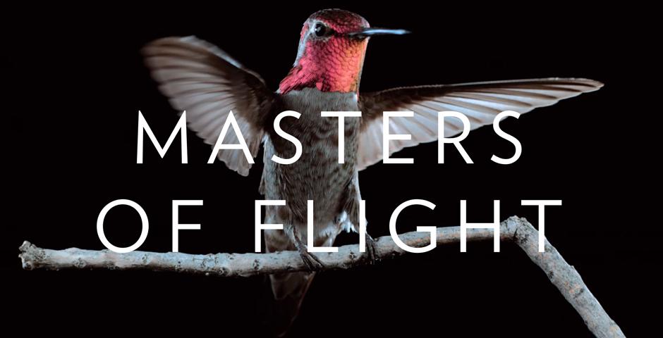 People's Voice / Webby Award Winner - Hummingbirds