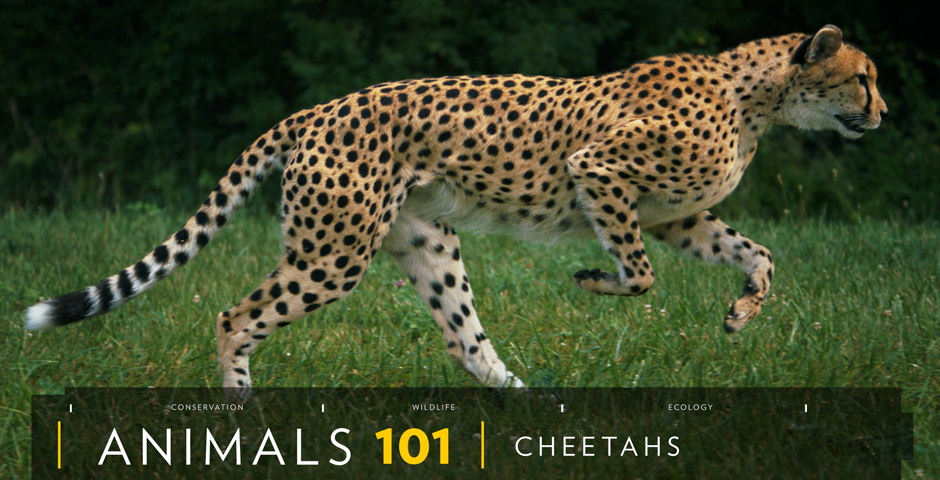 Nominee - National Geographic's 101 Series