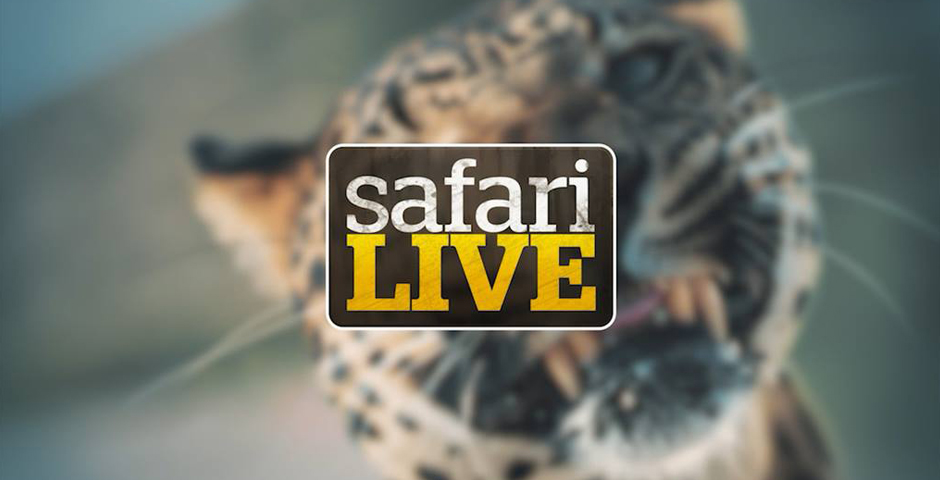 2018 Webby Winner - Safari Live On-Demand