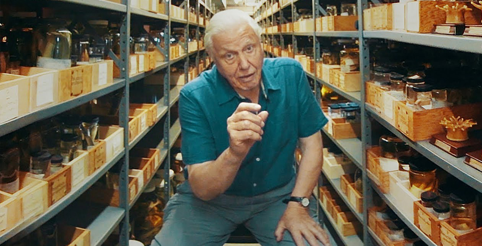 2018 Webby Winner - Sir David Attenborough on Museum Collections