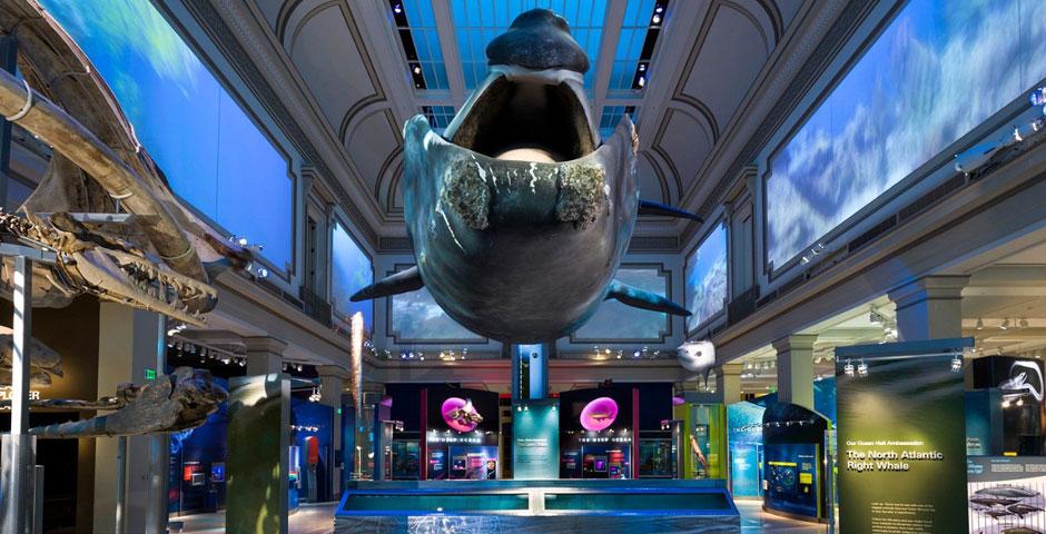 Nominee - Smithsonian Ocean Portal