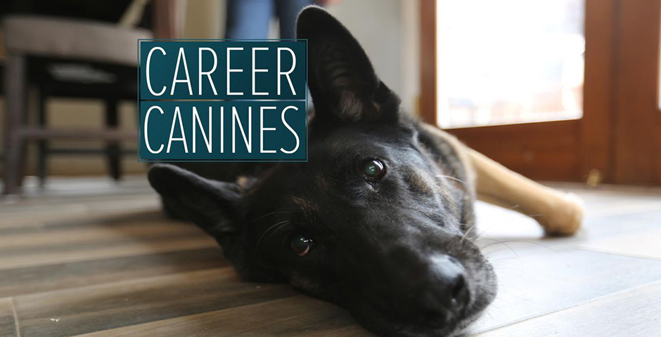 People's Voice - ABC News: Career Canines