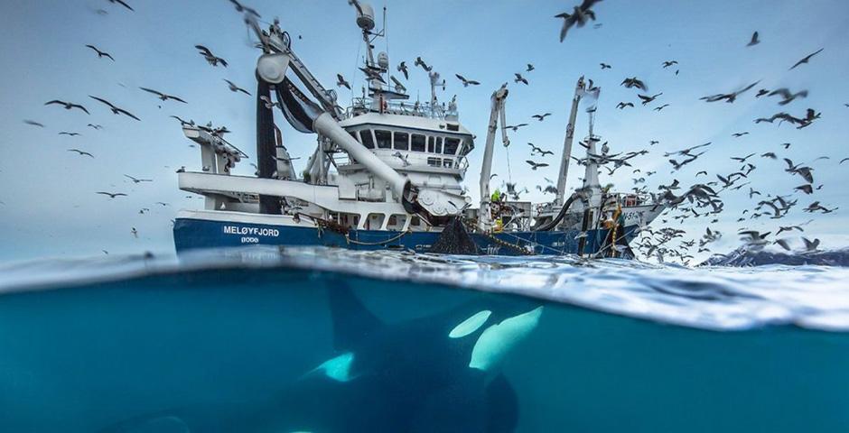 Nominee - Audun Rikardsen's unseen Arctic world