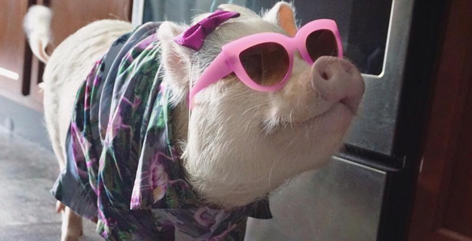 Nominee - Hamlet the Piggy